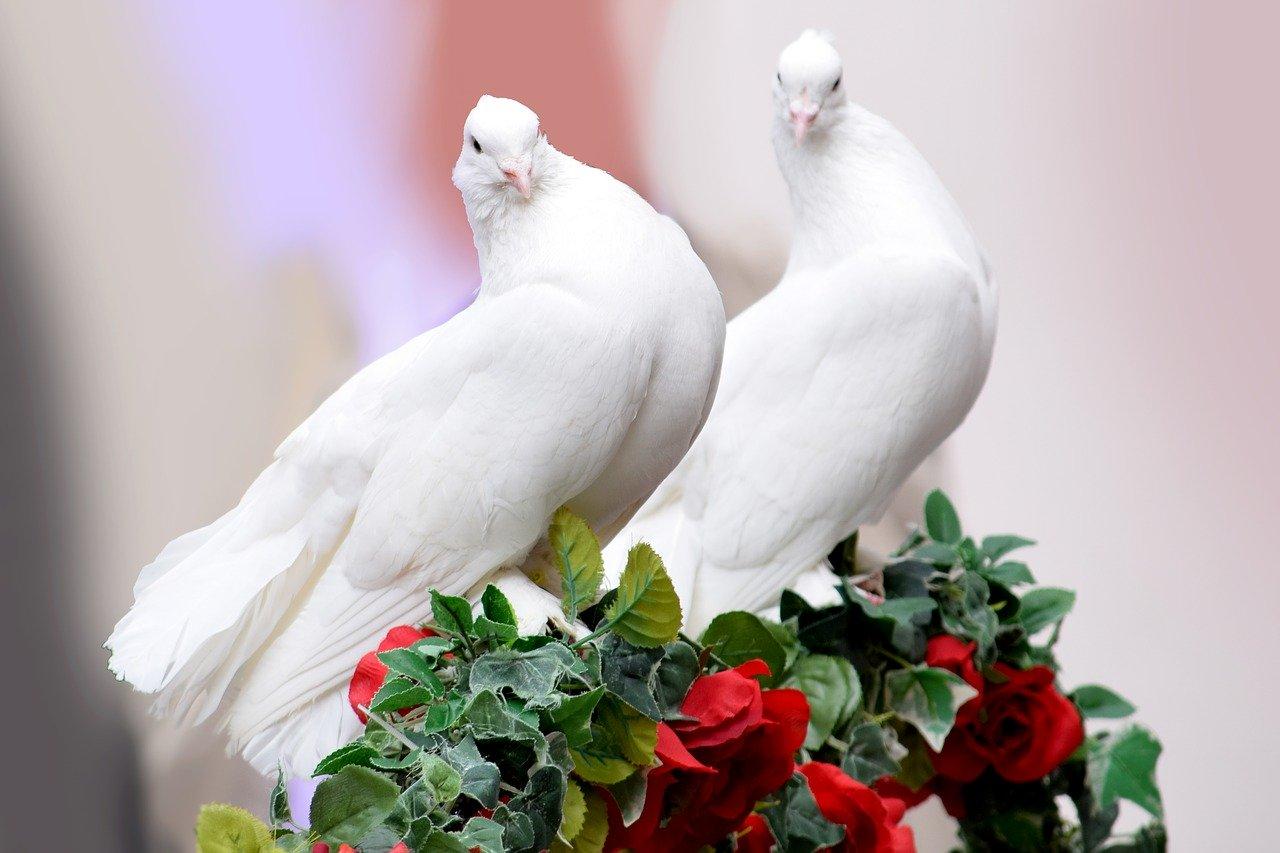 O czym pamiętać przy organizacji wesela?